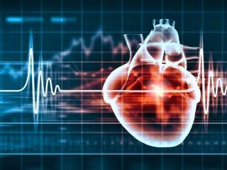 Srdce, tep, záznam