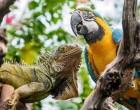 exotická zvířata - leguán a ara.