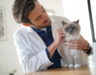 VET_kocka_veterinar_doktor_vysetreni