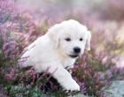 veterina_pes_stene_bily