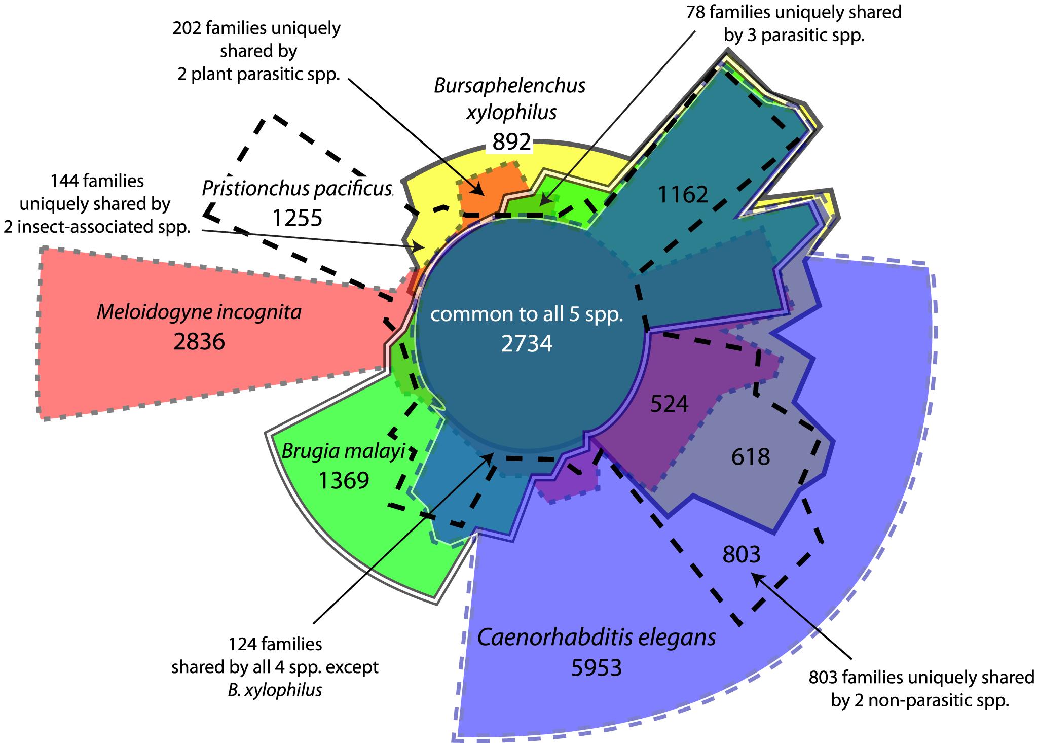 Distribution of orthologous gene families across five selected nematode genomes.