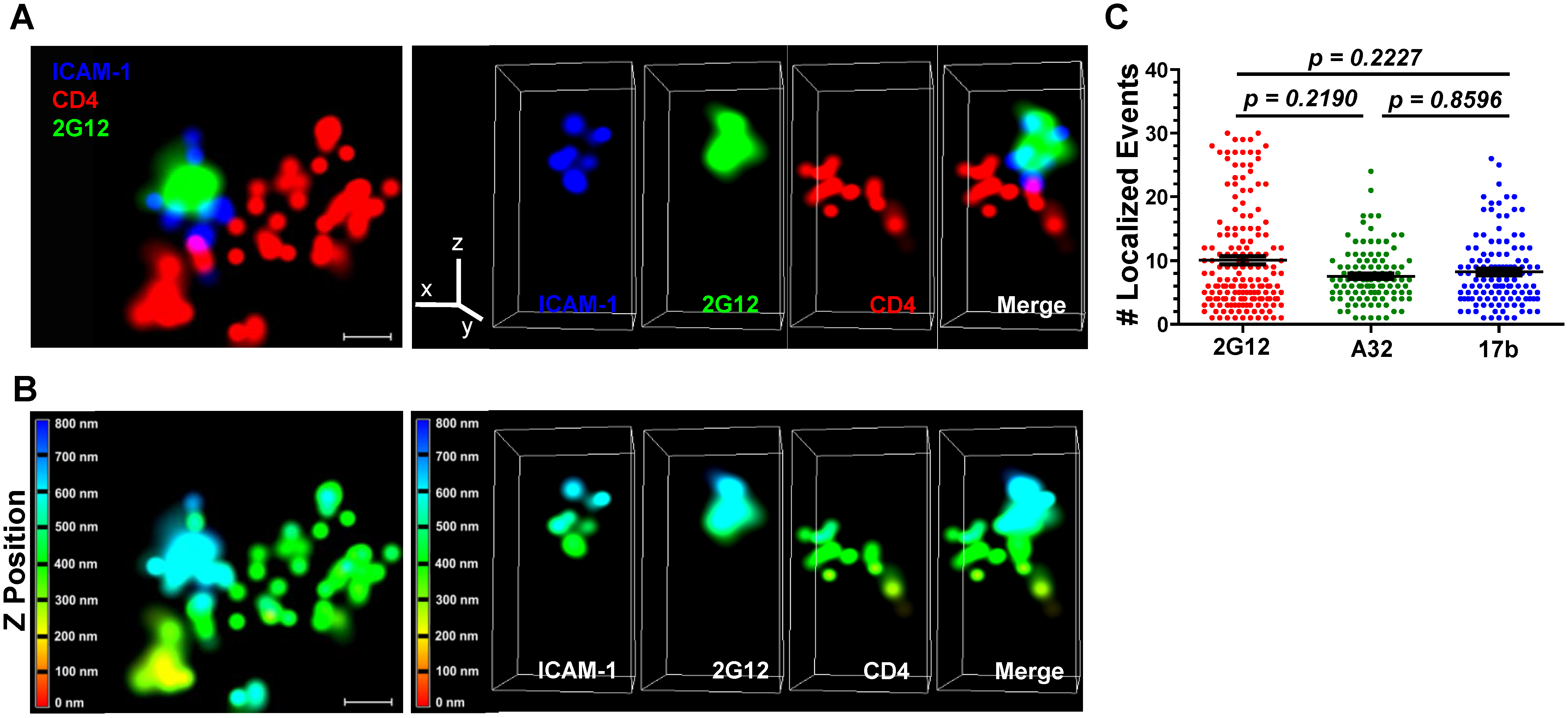 Superresolution imaging of Gp120 epitope exposure on TZM-bl-bound HIV<sub>JRFL</sub> virions.