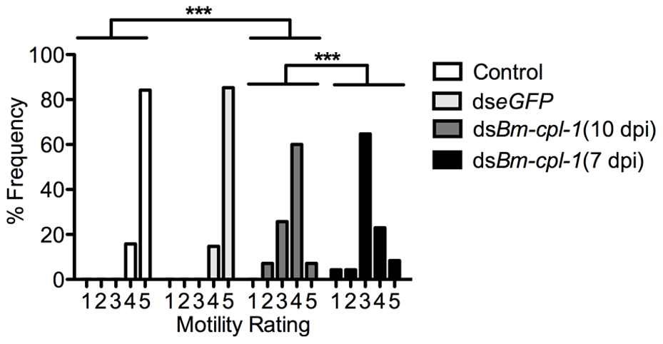 Aberrant motility of dsRNA <i>Bm-cpl-1</i>-exposed <i>B. malayi</i>.