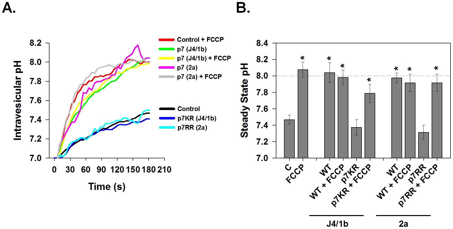 Conductive properties of HCV p7 proteins.