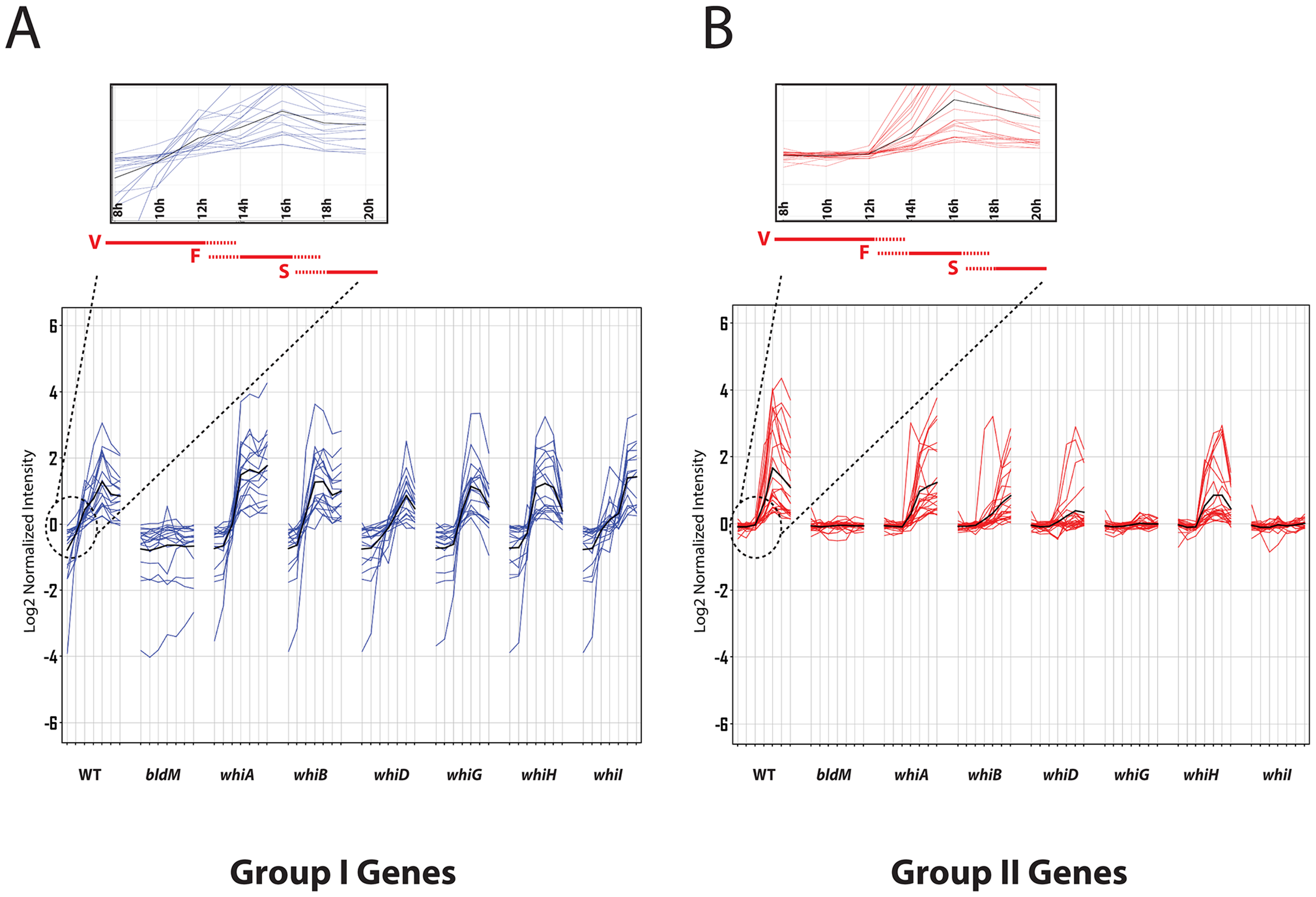 Microarray transcription profiles of (A) Group-I and (B) Group-II genes in wild-type <i>S. venezuelae</i> during submerged sporulation and in congenic <i>ΔbldM</i>, <i>ΔwhiA</i>, <i>ΔwhiB</i>, <i>ΔwhiD</i>, <i>ΔwhiG</i>, <i>ΔwhiH</i> and <i>ΔwhiI</i> null mutants grown under identical conditions.