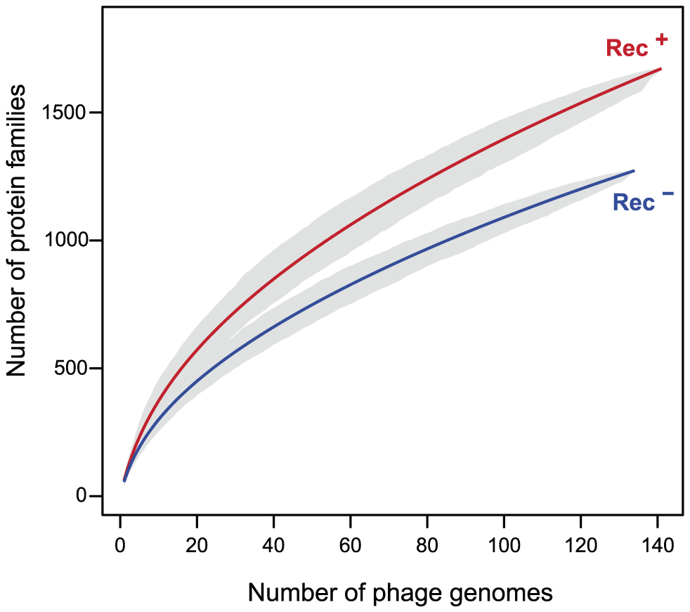 Pan genomes of the lambdoid phages encoding recombination functions (Rec<sup>+</sup>) are larger than those lacking them (Rec<sup>−</sup>).