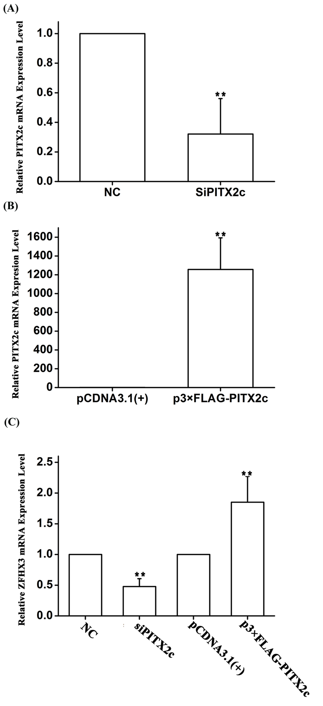 The <i>PITX2c</i> gene positively regulates expression of the <i>ZFHX3</i> gene. HCT116 cells were transfected with siRNA specific for <i>PITX2c</i> or an expression plasmid for <i>PITX2c</i> and used for isolation of total RNA samples and real time RT-PCR analysis.