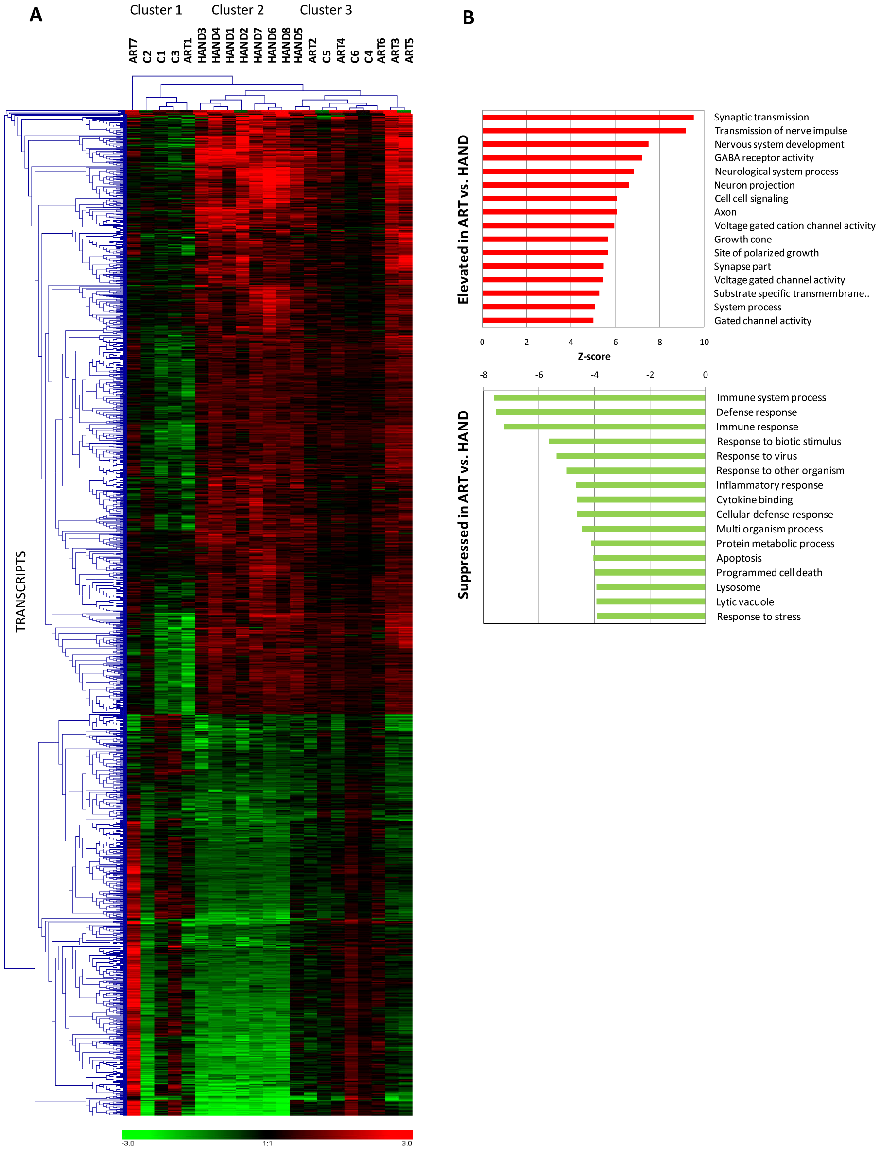 Extent and kind of differences in brain cell gene expression in untreated HAND patients and HAND patients receiving ART.