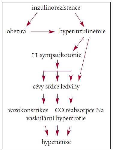 Schéma 2. Vztah inzulinorezistence a sympatoadrenálního systému při rozvoji hypertenze.