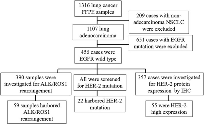 Study design. 456 cases with EGFR wild type were screened from 1316 patients and enrolled in this study