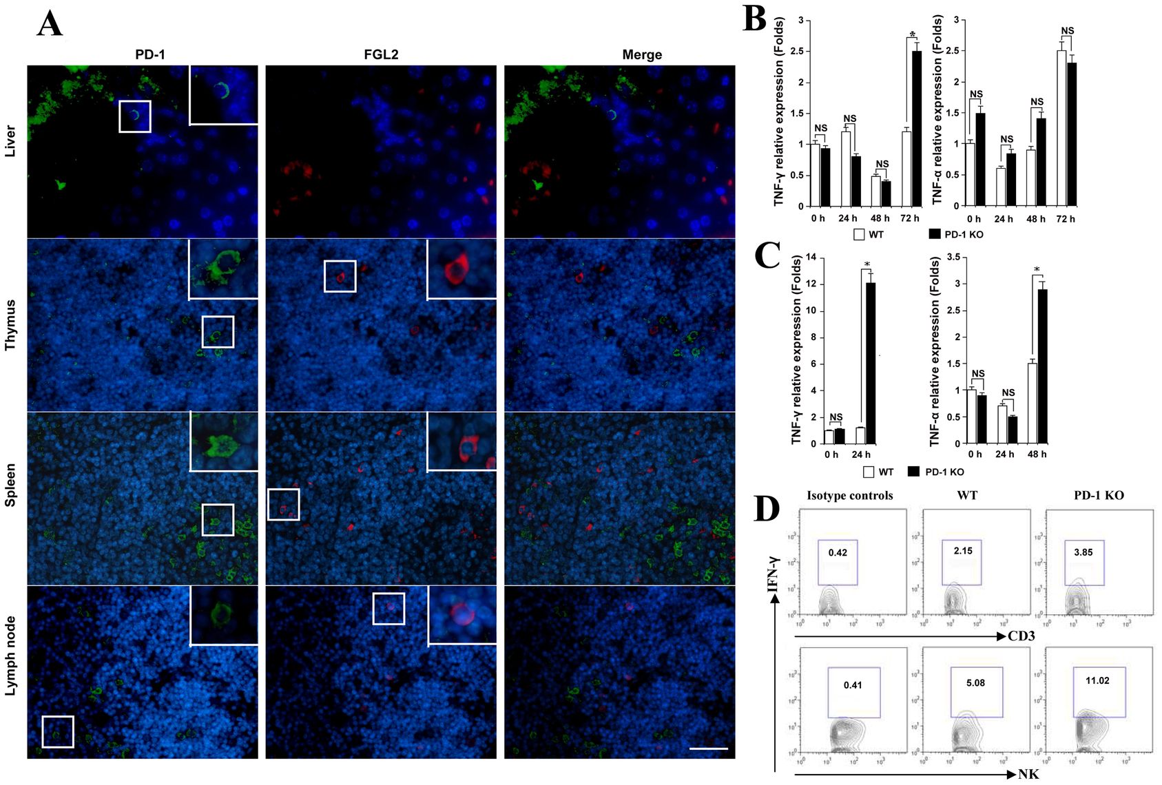 MHV-3 infection induced high levels of IFN-γ and TNF-α in PD-1-deficient mice.