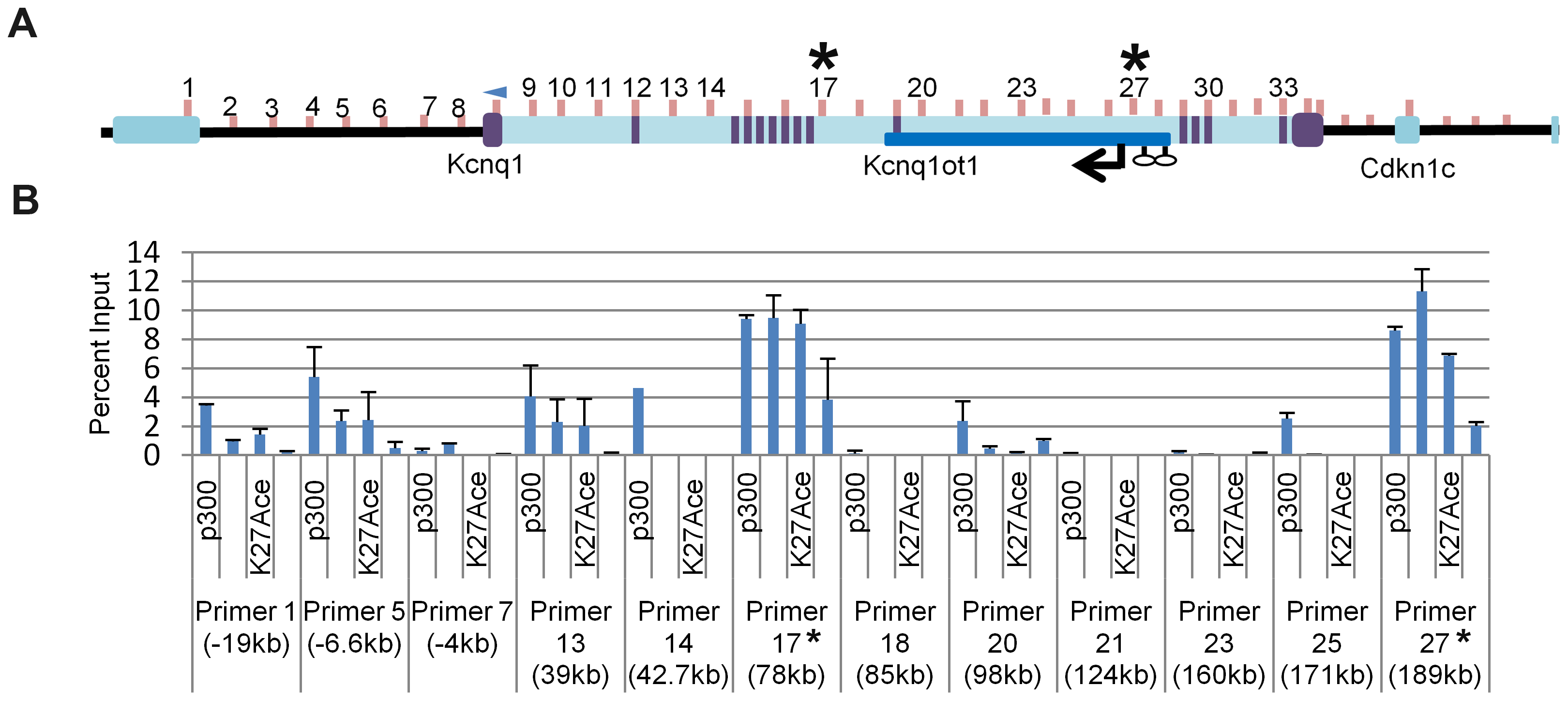 Chromatin immunoprecipitation (ChIP) of selected regions of the <i>Kcnq1</i> gene.