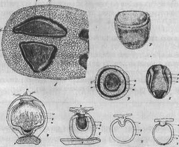 Ilustrace Obr. 3. Ilustrace ze spisu M. Fraenkela. ze spisu I. Raschkowa.
