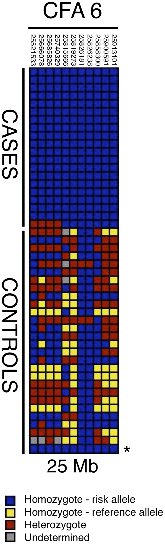 Haplotypes in CFA6 region 25 Mb.