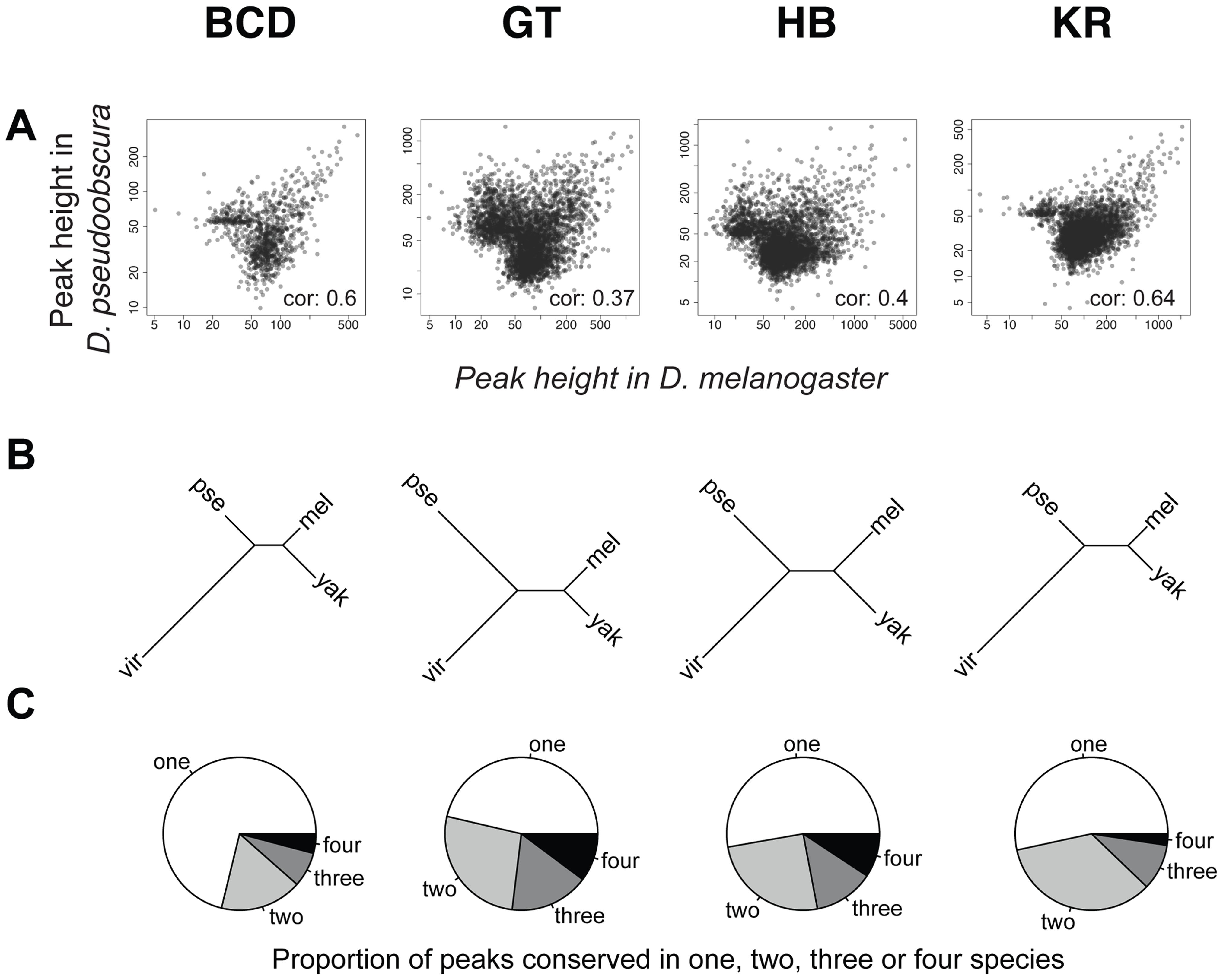 Comparison of BCD, GT, HB and KR binding in <i>D.melanogaster</i>, <i>D.yakuba</i>, <i>D.pseudoobscura</i> and <i>D.virilis</i>.