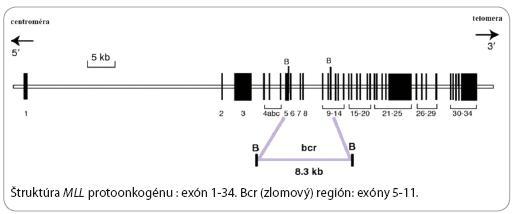 Štruktúra MLL protoonkogénu.