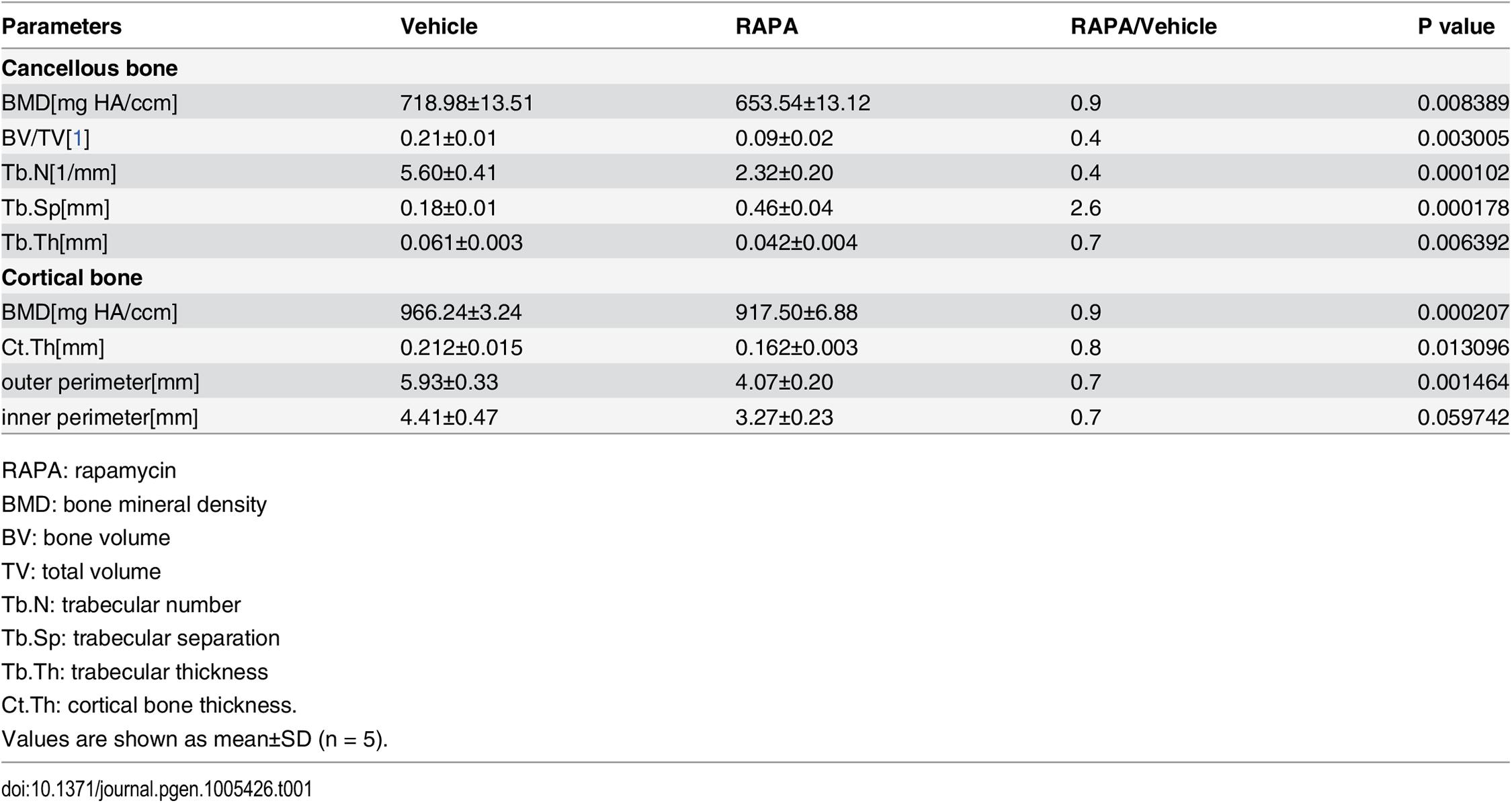 Micro CT analysis of rapamycin-treated C57BL/6 mice at 10 weeks of age.