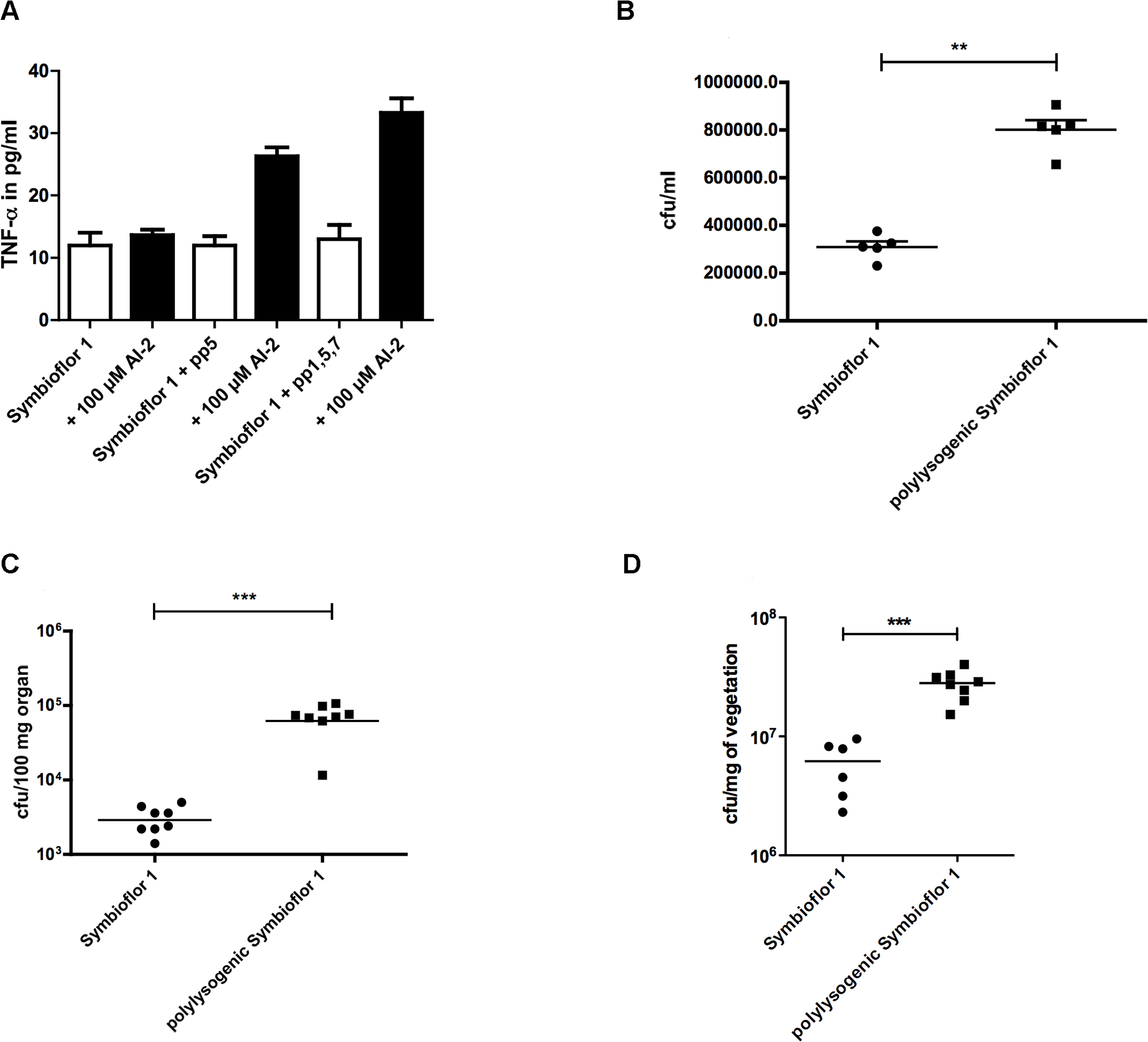Influence of phages on virulence of <i>E. faecalis</i> Symbioflor 1: Virulence of polylysogenic Symbioflor 1 was compared to Symbioflor1 <i>in vitro</i>, a TNF-α assay (A) and an adherence assay to CaCo cells (B) was done.