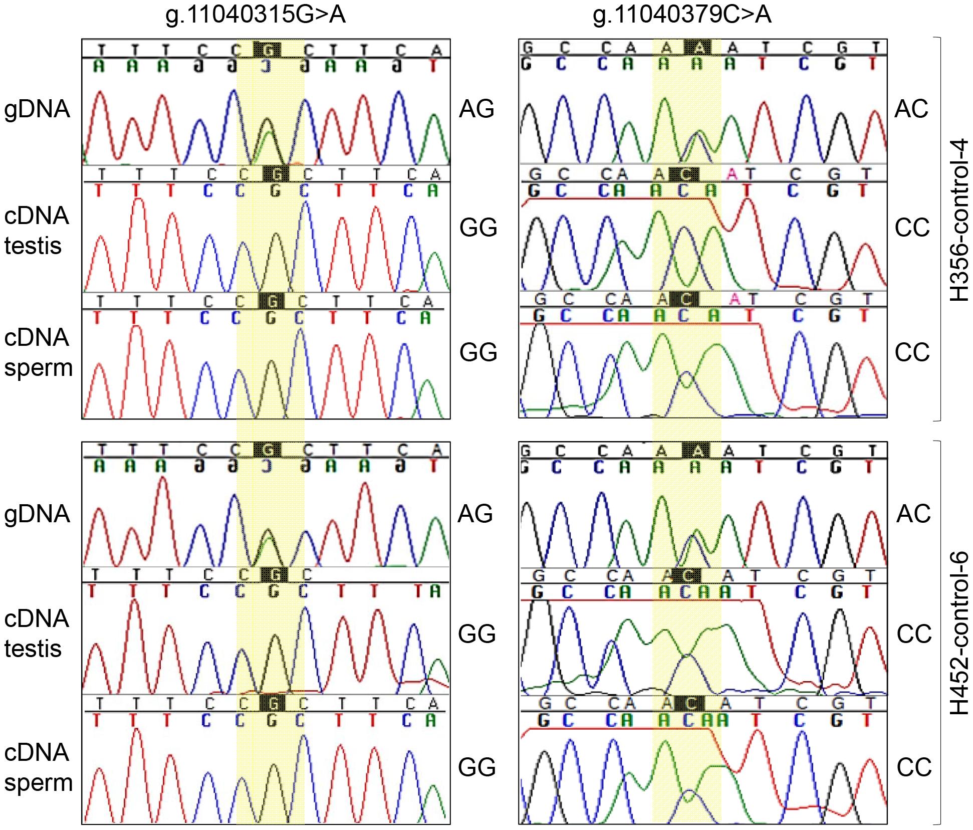 Monoallelic expression of equine <i>FKBP6</i>.
