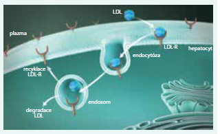 FH je receptorová nemoc