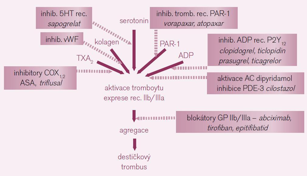 Možnosti inhibice primární hemostázy – vzhledem k řadě možností aktivace trombocytů, máme i řadu léčebných strategií. Tučně jsou uvedeny již zavedené léky, slabě léky ve vývoji či u nás nedostupné (vysvětlivky: COX – cyklo-oxygenáza, 5HT – serotonin, PAR-1 – proteázou aktivované receptory 1 neboli receptory trombinové, ADP – adenozin difosfát, AC – adenylát-cykláza, PDE-3 – fosfodiesteráza 3).