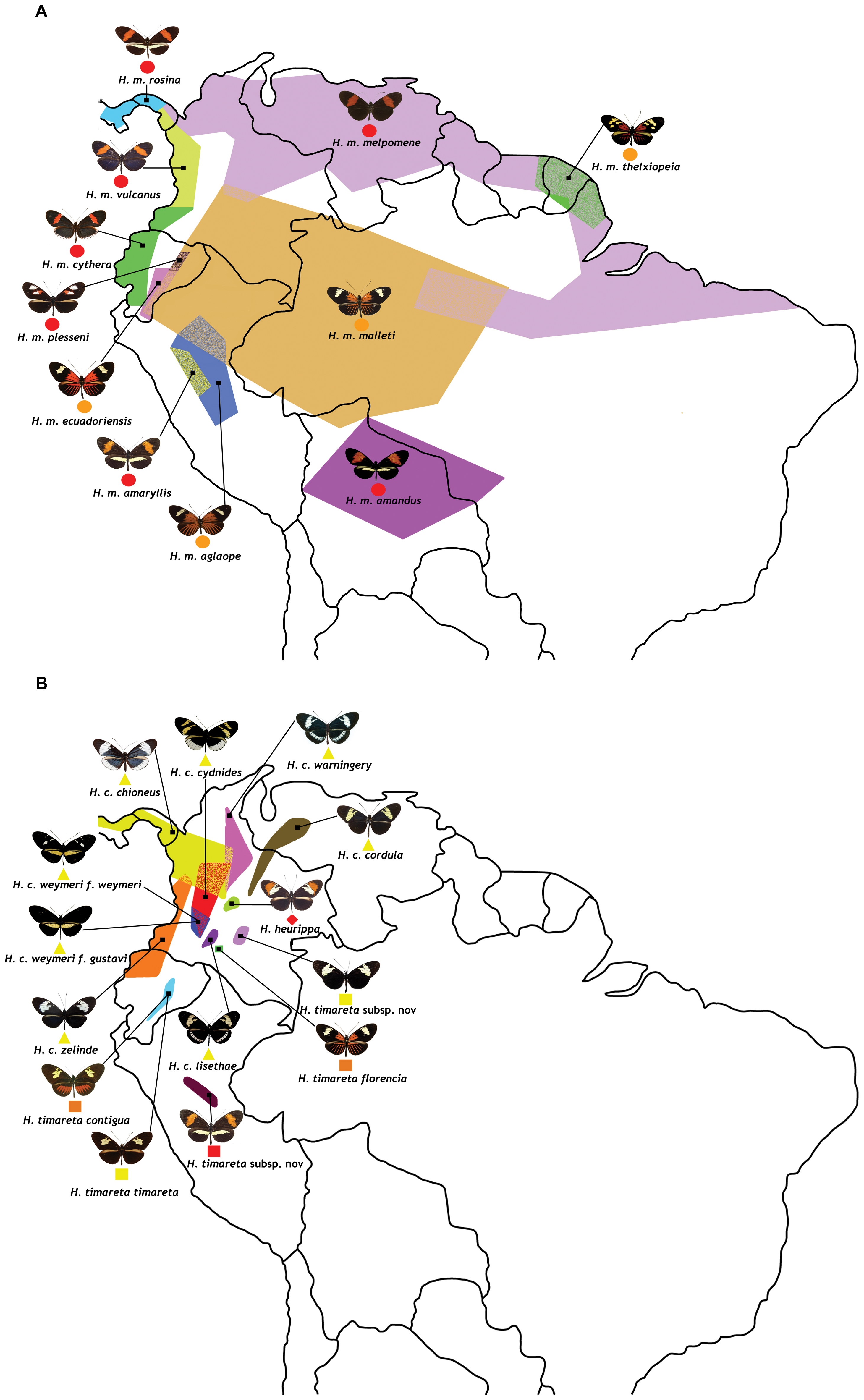 Geographic distribution and phenotype radiation of the species and races used in this study.