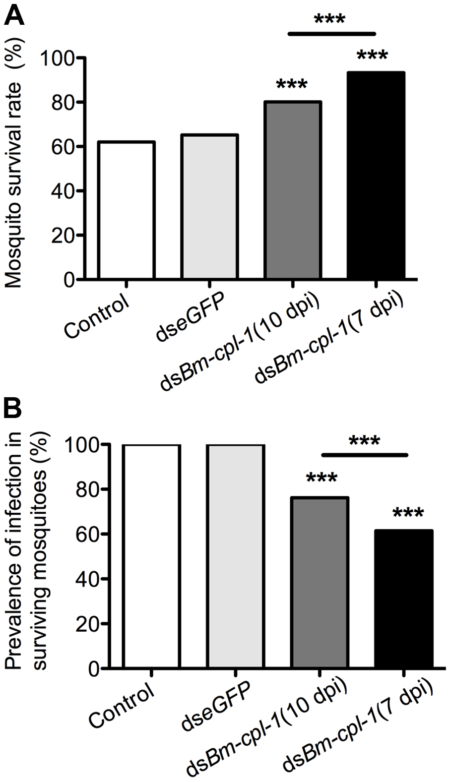 <i>Ae. aegypti</i> survival significantly increases as infection prevalence decreases in <i>Bm-cpl-1</i>-dsRNA exposed mosquitoes.