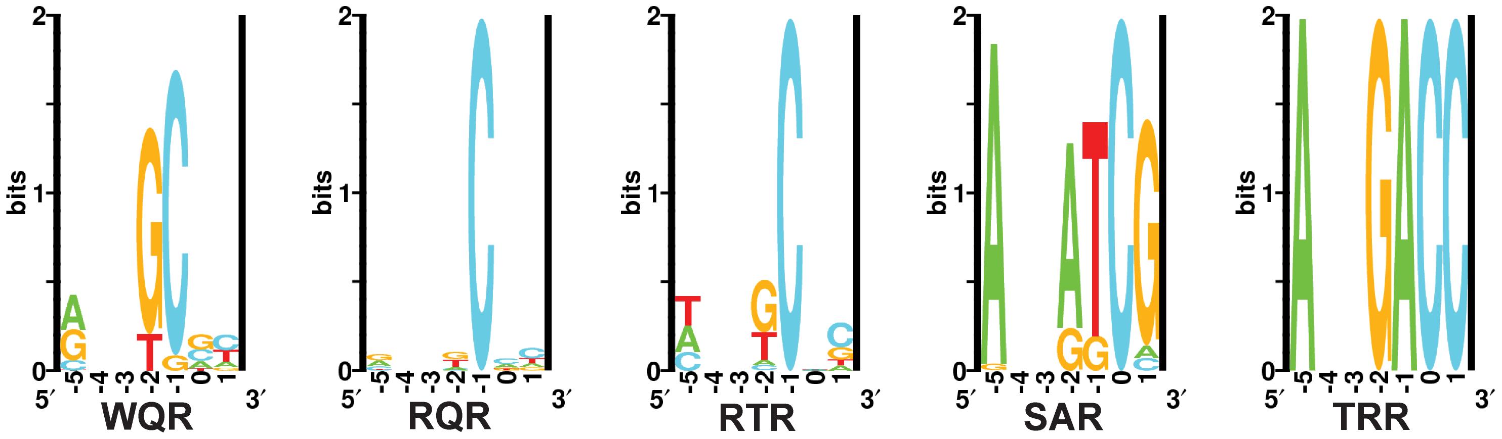 <i>In vivo</i> binding site selection logos.