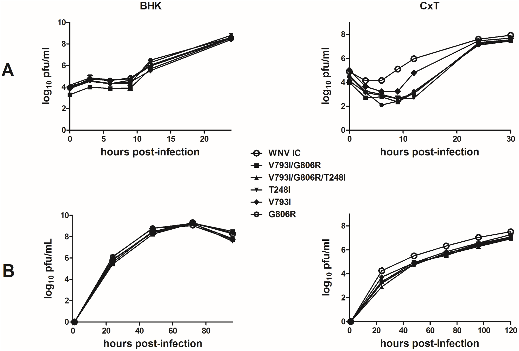 Host-specific effects of WNV replication complex mutations on replicative fitness <i>in vitro</i>.