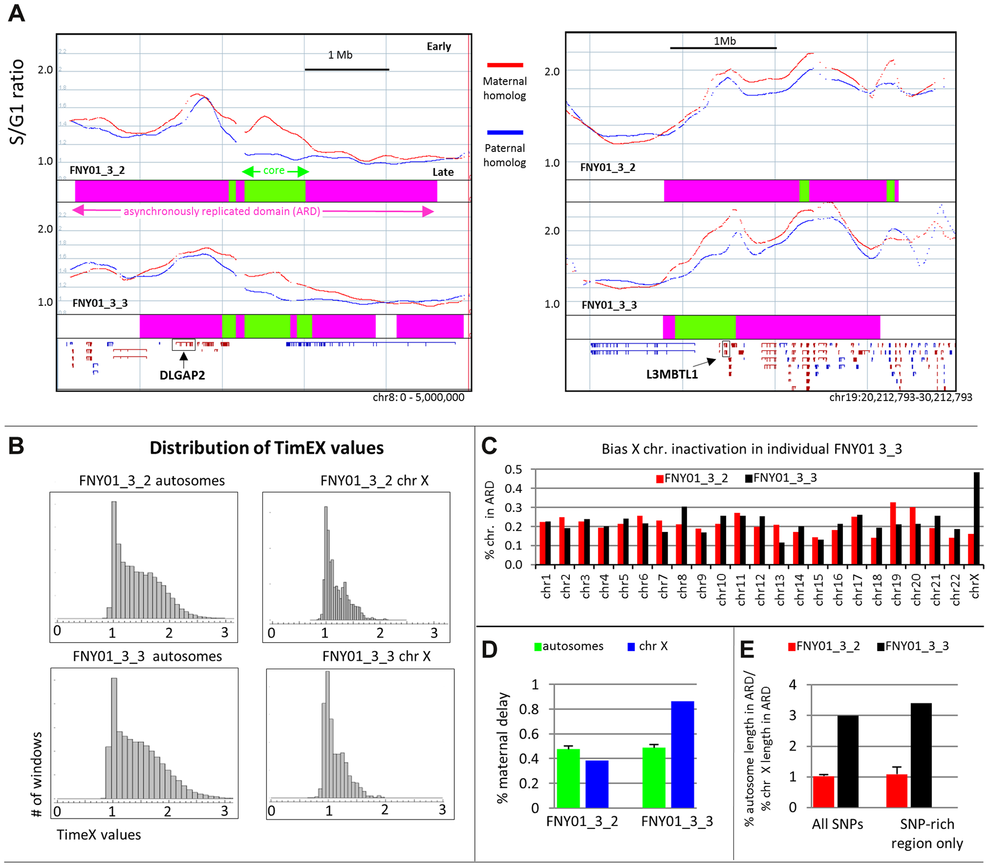 Large asynchronously replicated region contains imprinted genes.