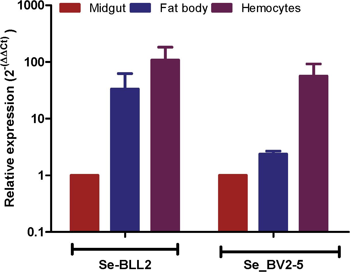 Expression of <i>BLL2</i> and <i>BV2-5</i> in main larval tissues of <i>S</i>. <i>exigua</i>.