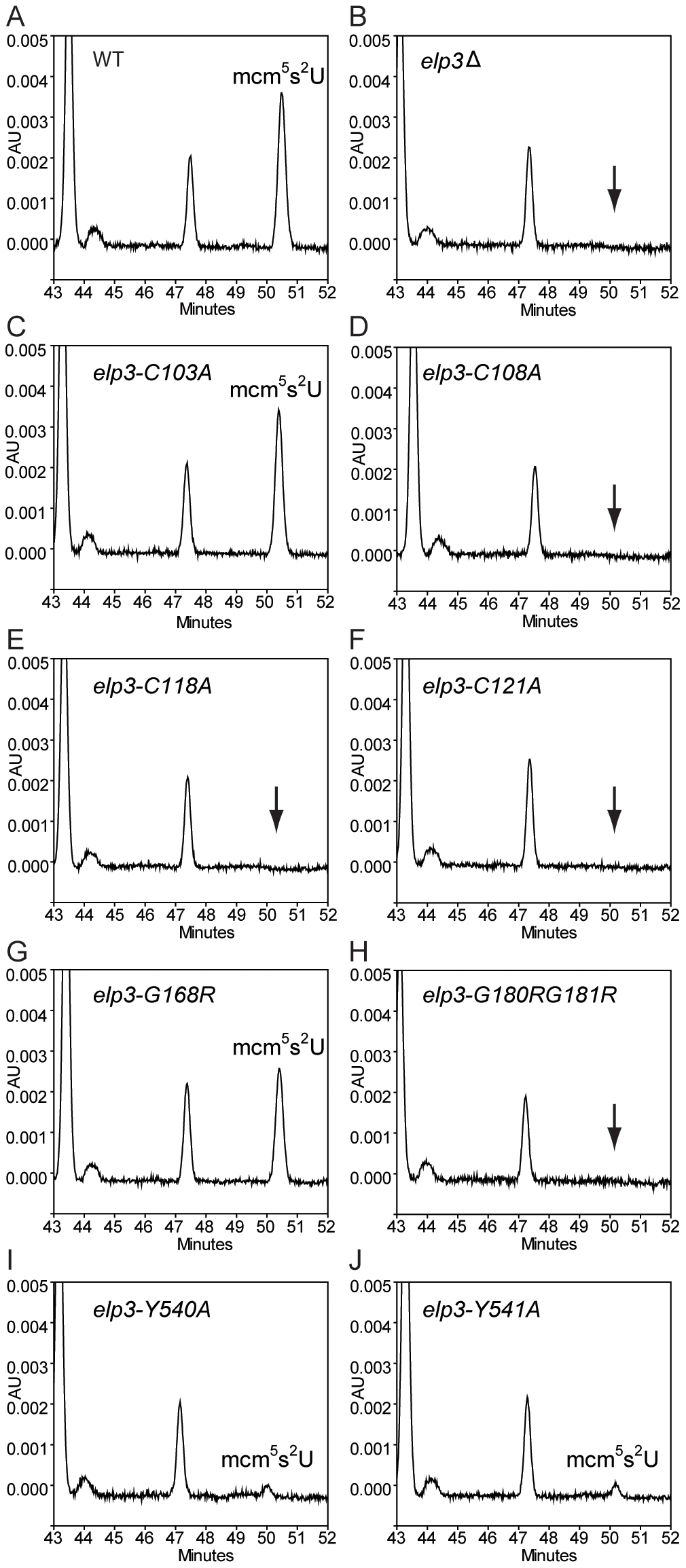 HPLC analysis of total tRNAs isolated from mutants with different alleles of <i>ELP3</i>.
