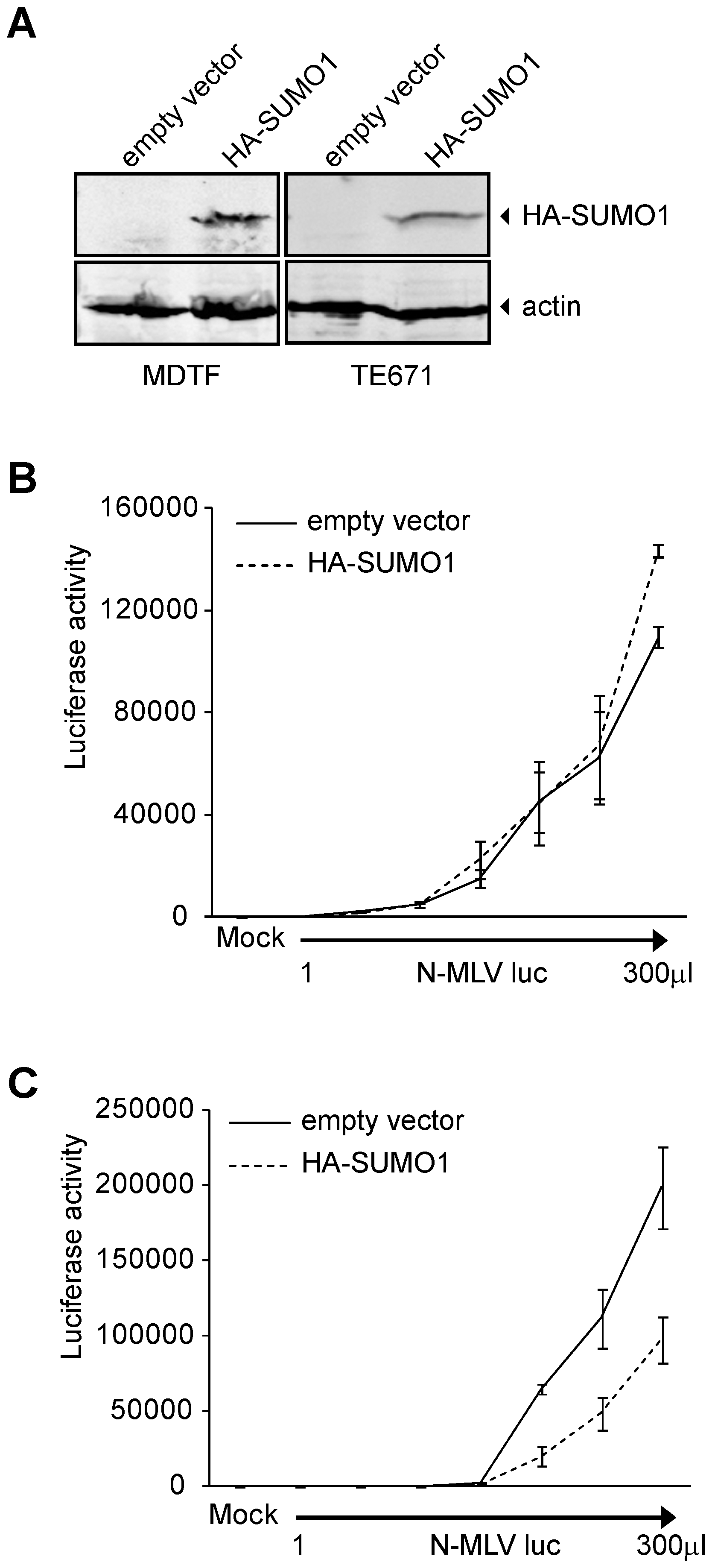 Overexpression of SUMO-1 in MDTF and TE671 cells.