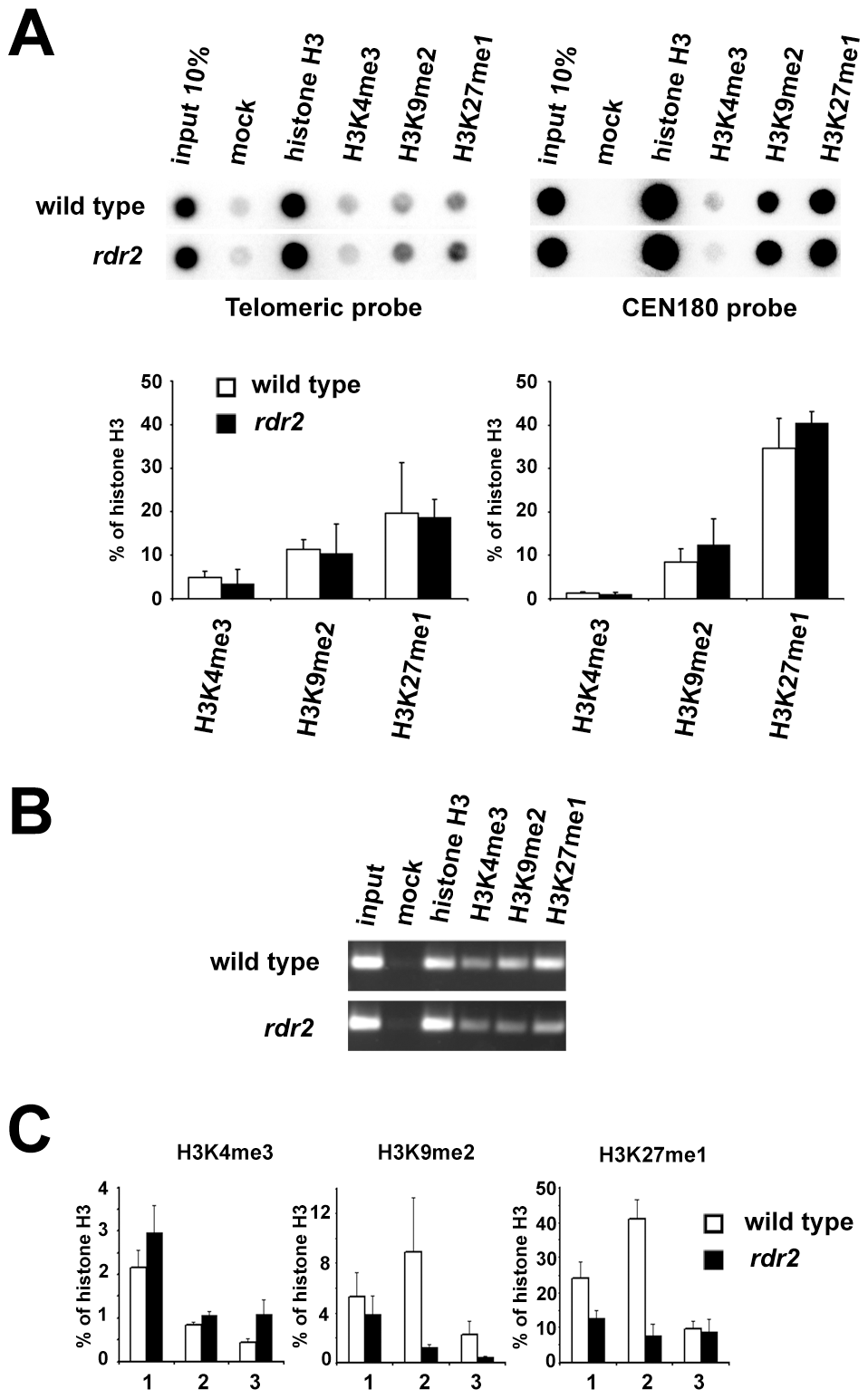 Telomeric heterochromatin in RdDM mutants.