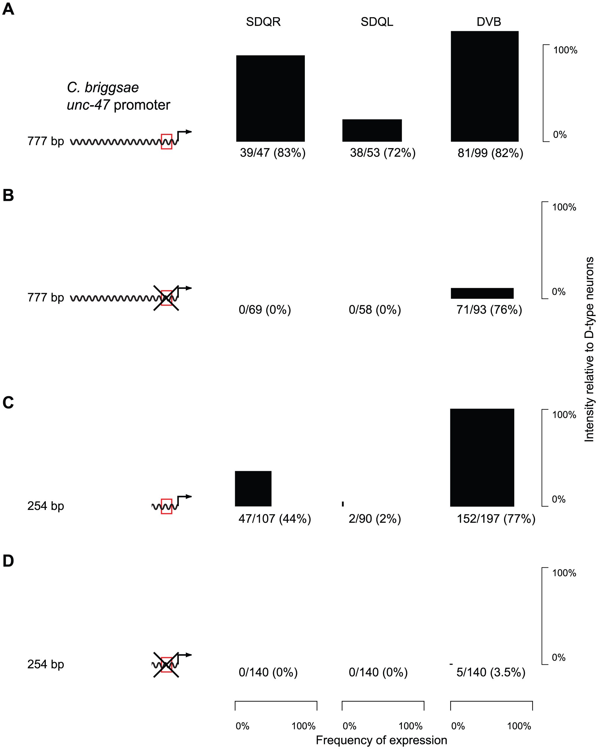 Expression in SDQR/L is mediated by a conserved motif, which also controls expression in DVB.
