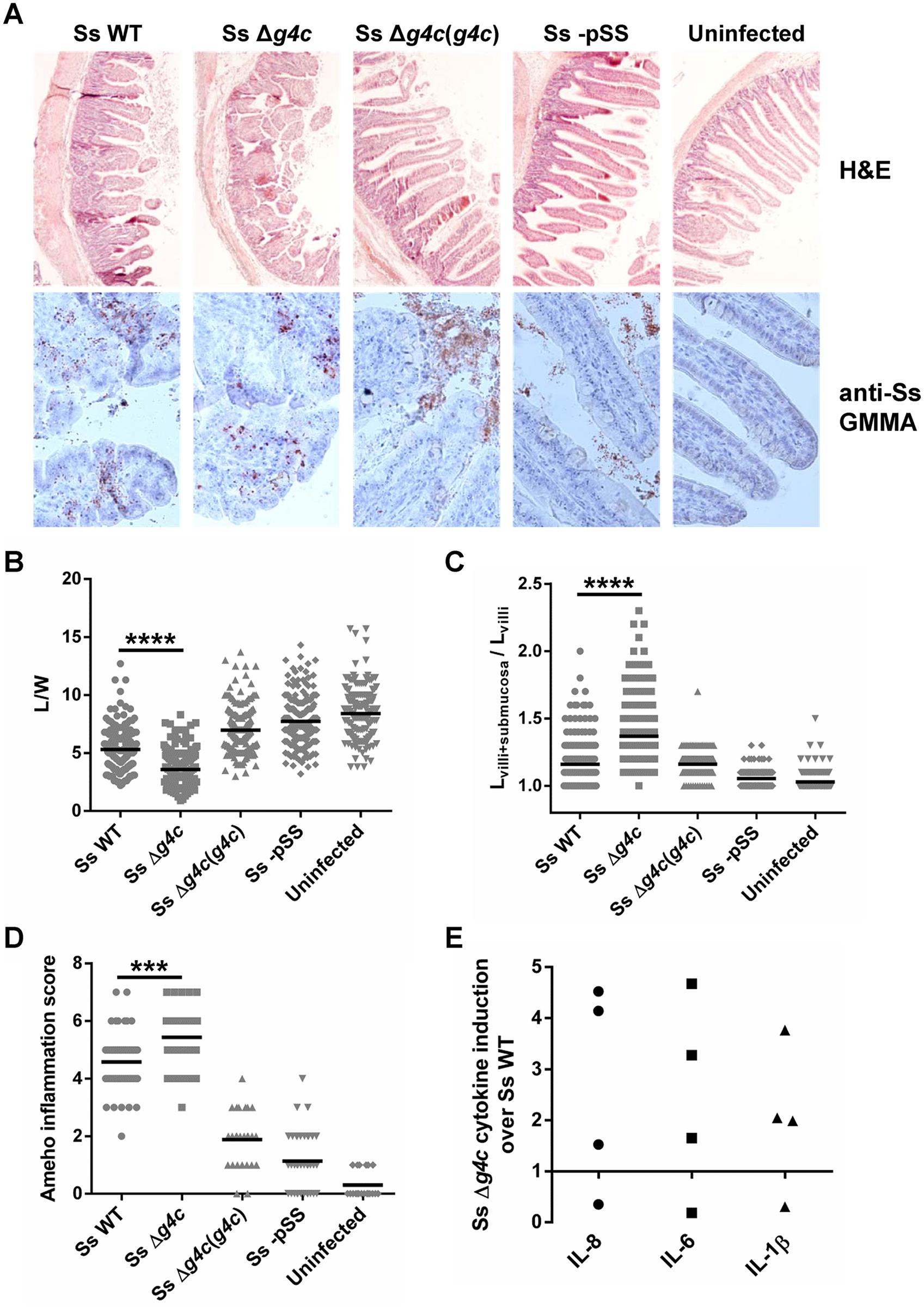 Group 4 capsule affects the pattern of <i>S</i>. <i>sonnei</i> pathology in the rabbit intestine.