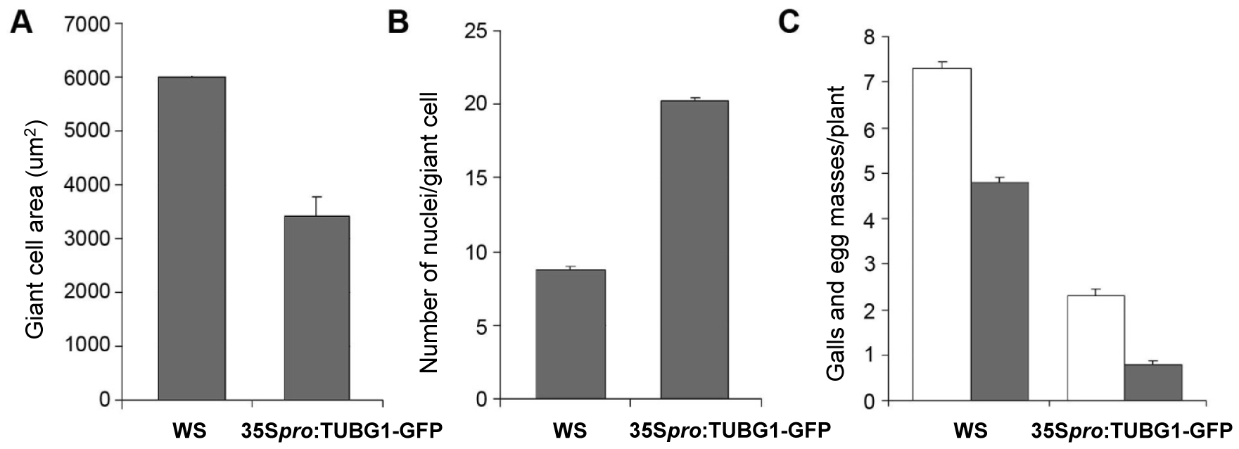 Giant Cell Area, Number of Nuclei and Infection Tests of γ-Tubulin Mutants Compared to Wild-Type.