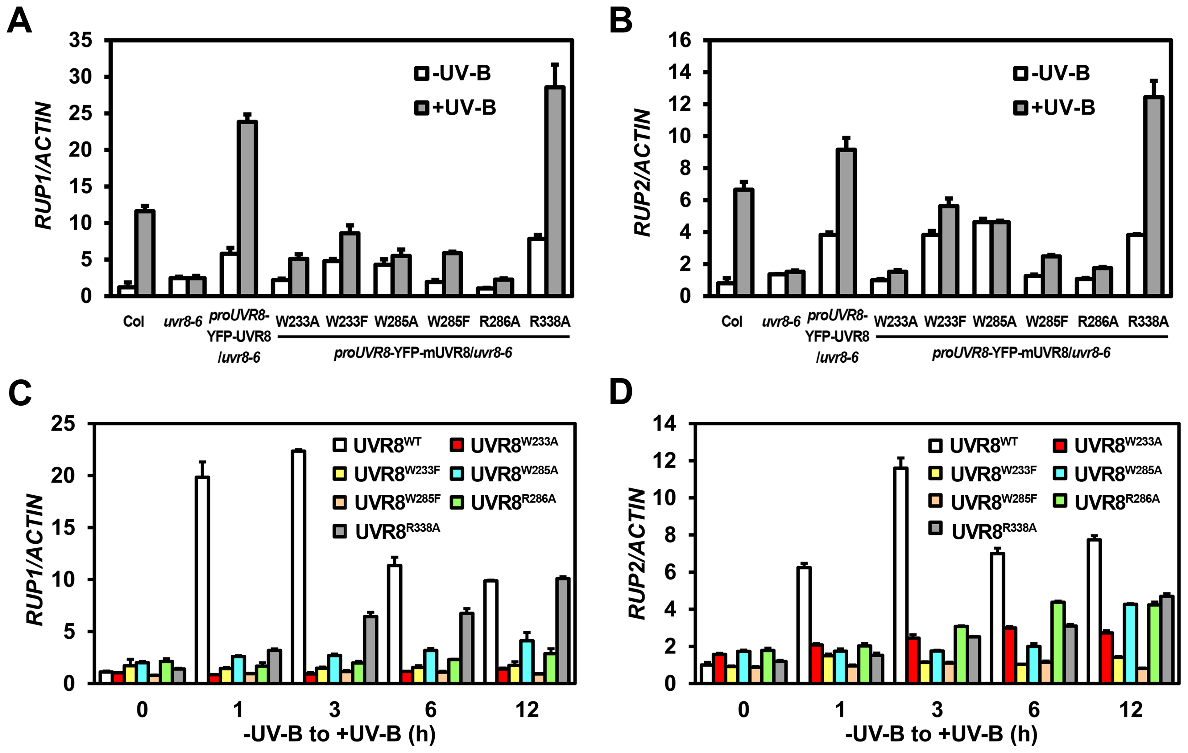 UVR8 variants show defective transcriptional regulation of <i>RUP1</i> and <i>RUP2</i> by photomorphogenic UV-B.