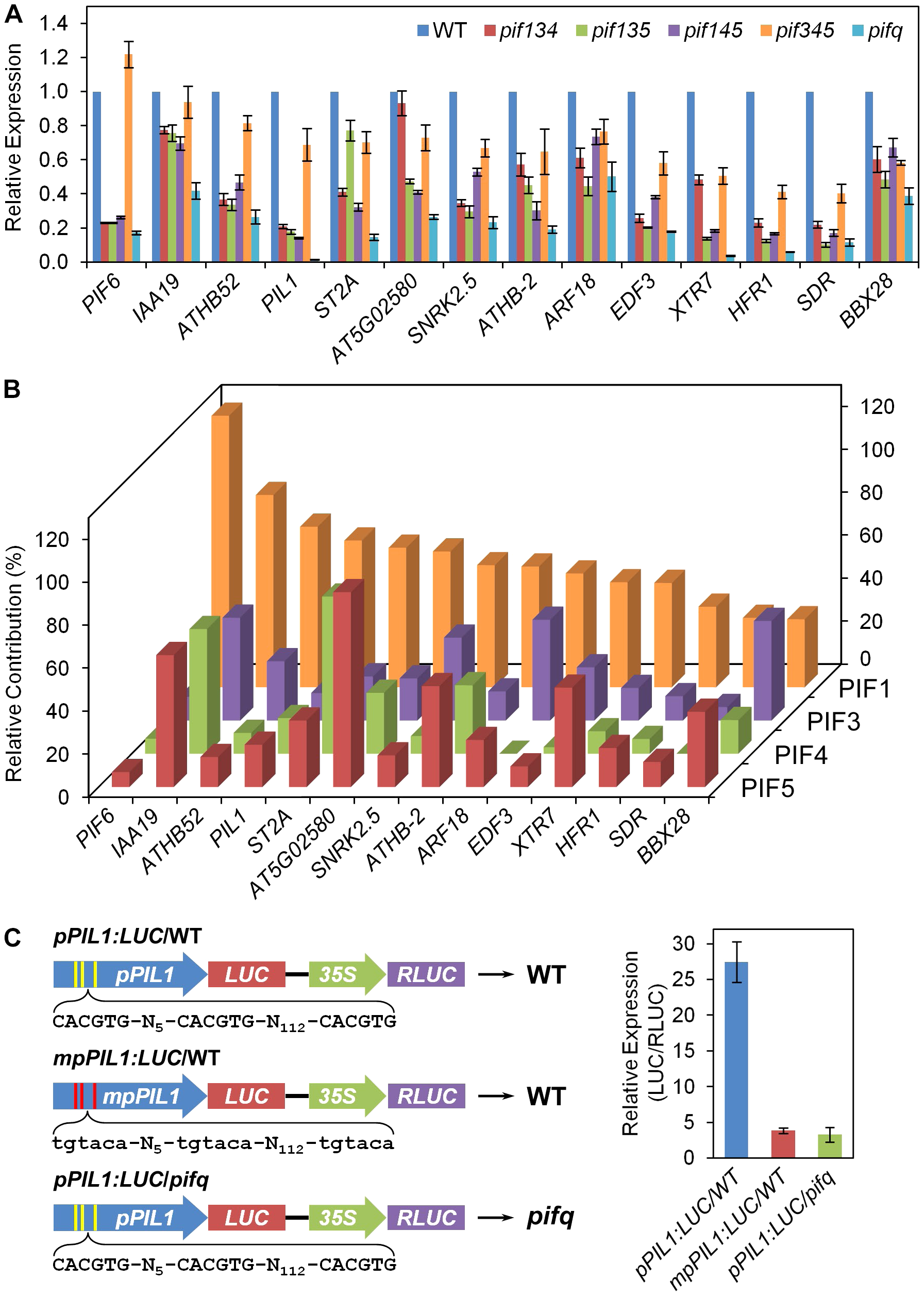 Differential regulation of PIF3 direct-target genes by individual PIF-quartet proteins.