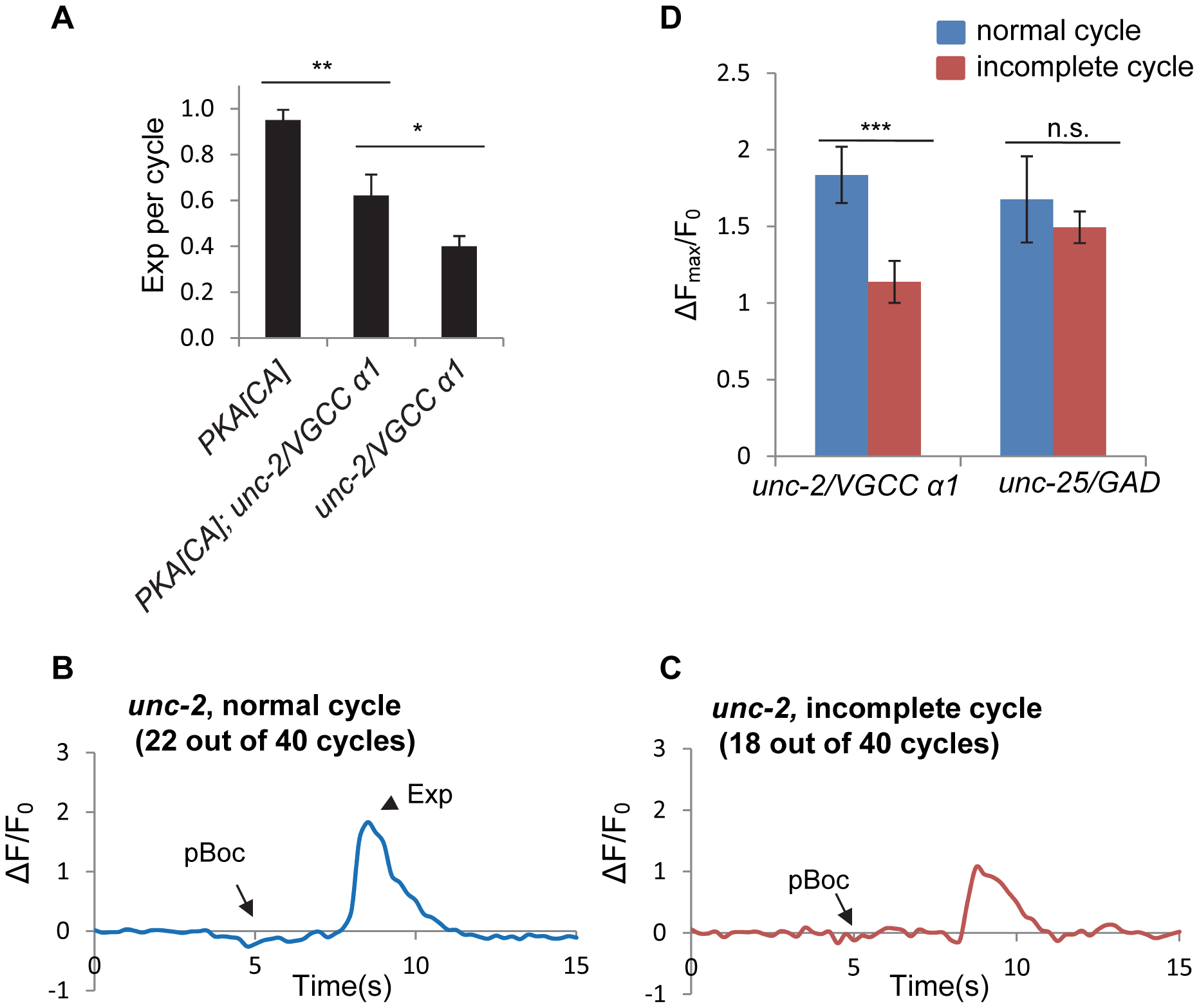 <i>unc-2</i>/VGCC functions downstream of PKA to mediate calcium influx in the GABAergic neurons.