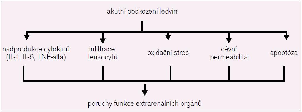 Mechanizmy, kterými AKI ovlivňuje funkci vzdálených orgánů.