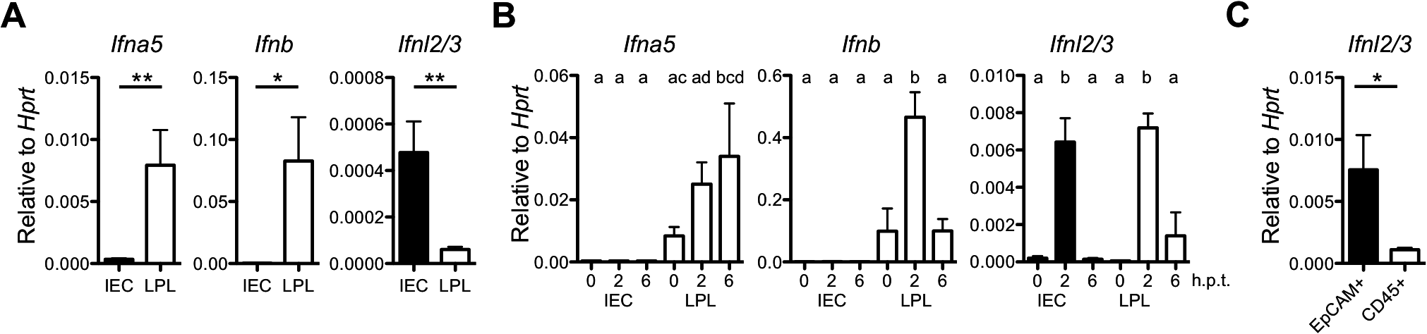 IECs are potent producers of IFN-λ but not type I IFN.