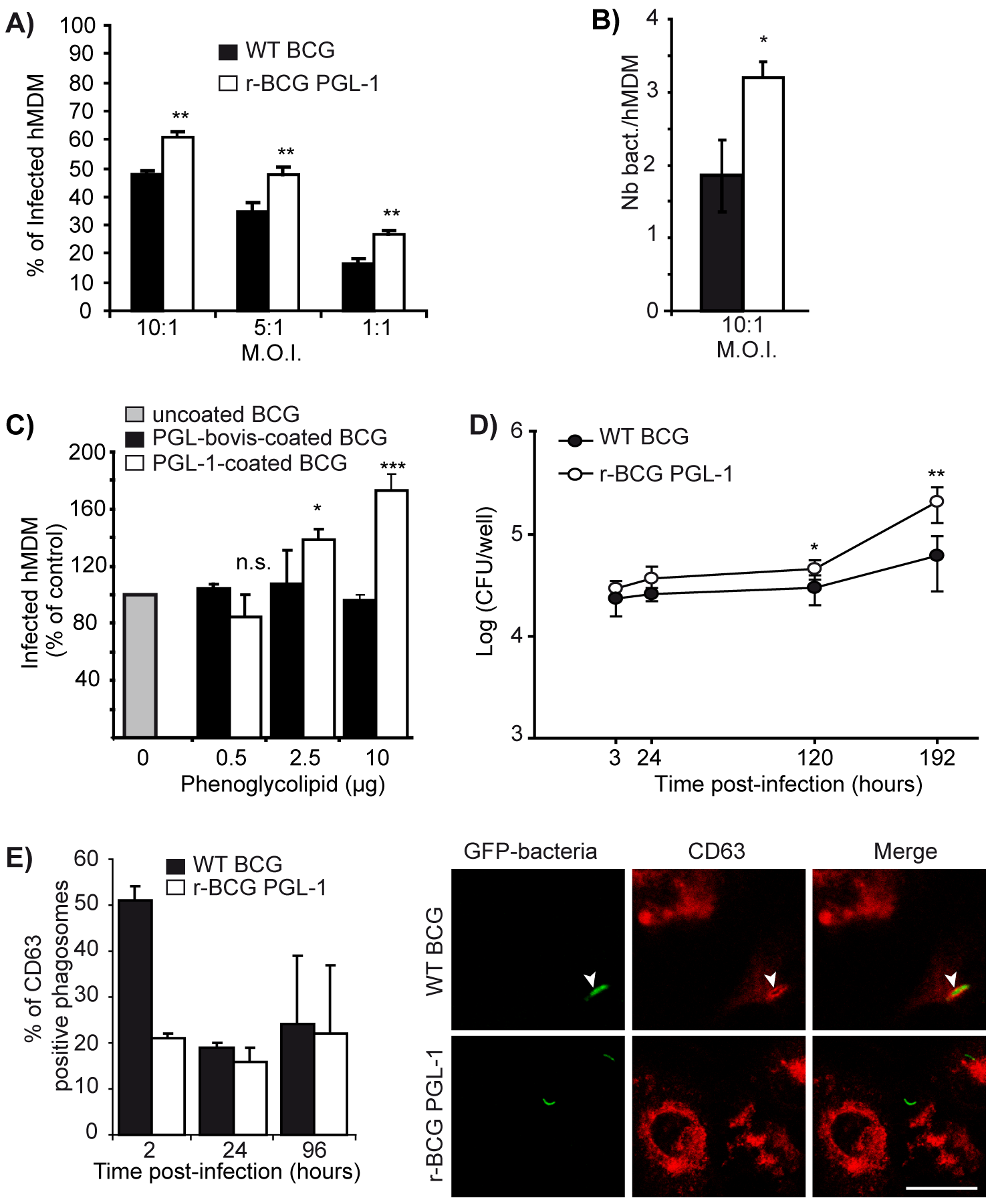 Effect of PGL-1 production on hMDM infection.