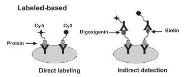 Fig. 1. Antibody microassay format