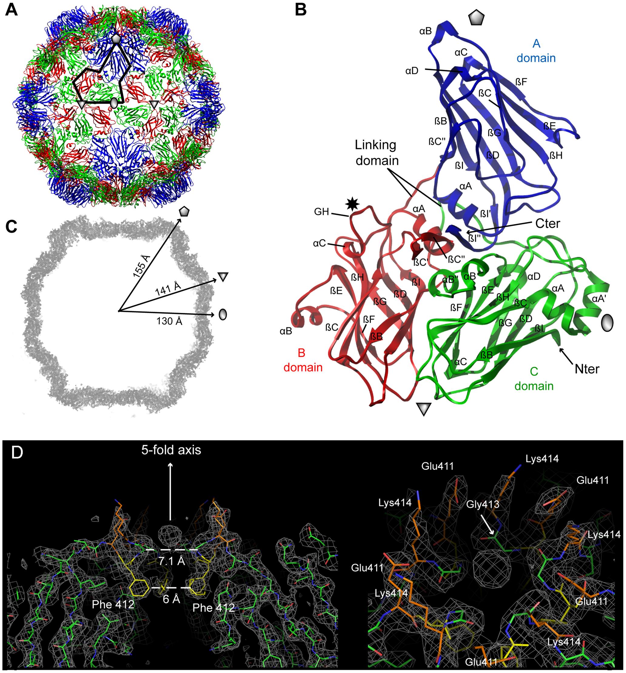 Crystal structures of GFLV-F13 and GFLV-TD.