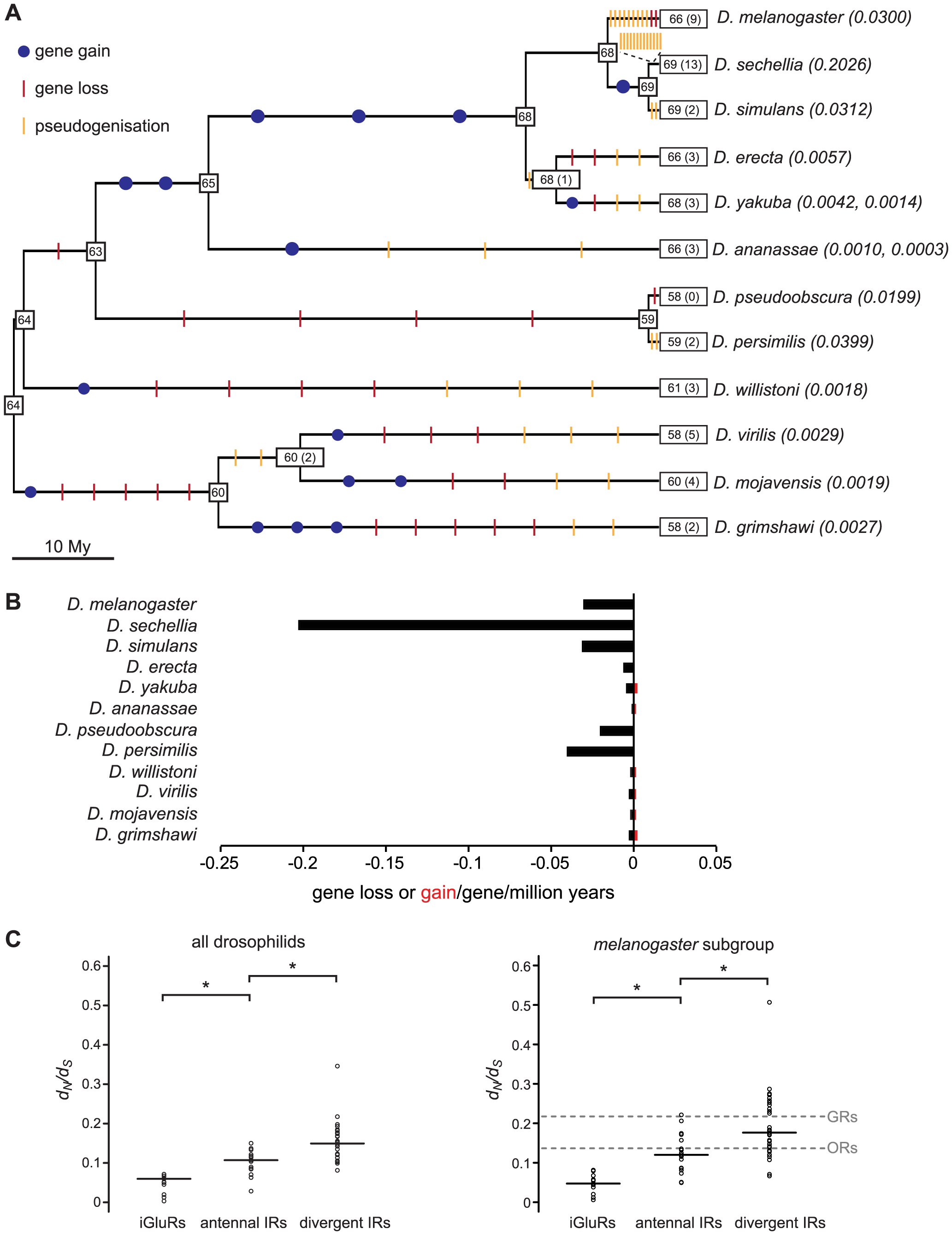 Gene loss and gain and selective pressures in drosophilid IR repertoires.