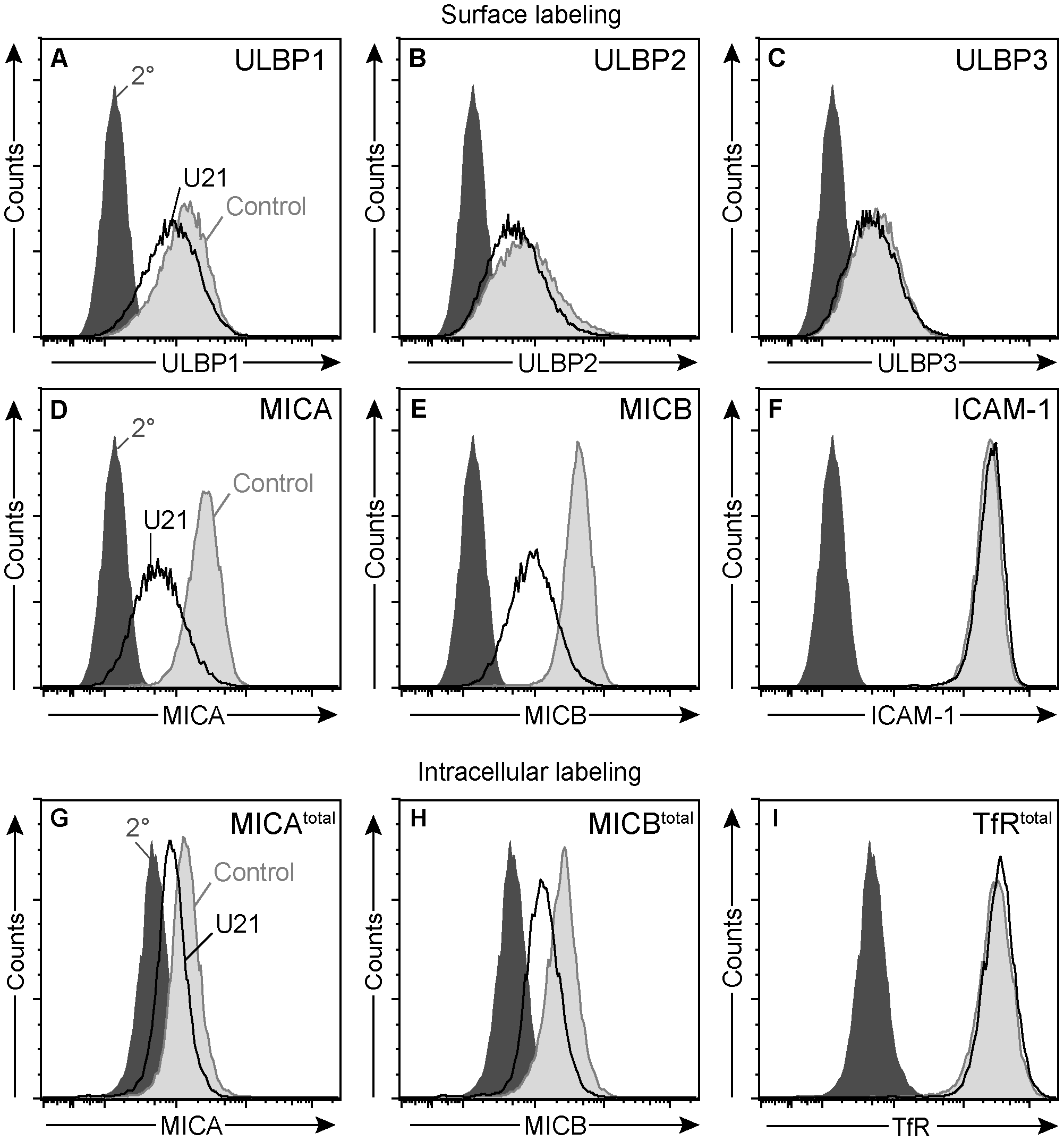 U21 down-regulates and destabilizes MICA and MICB in K562 cells.