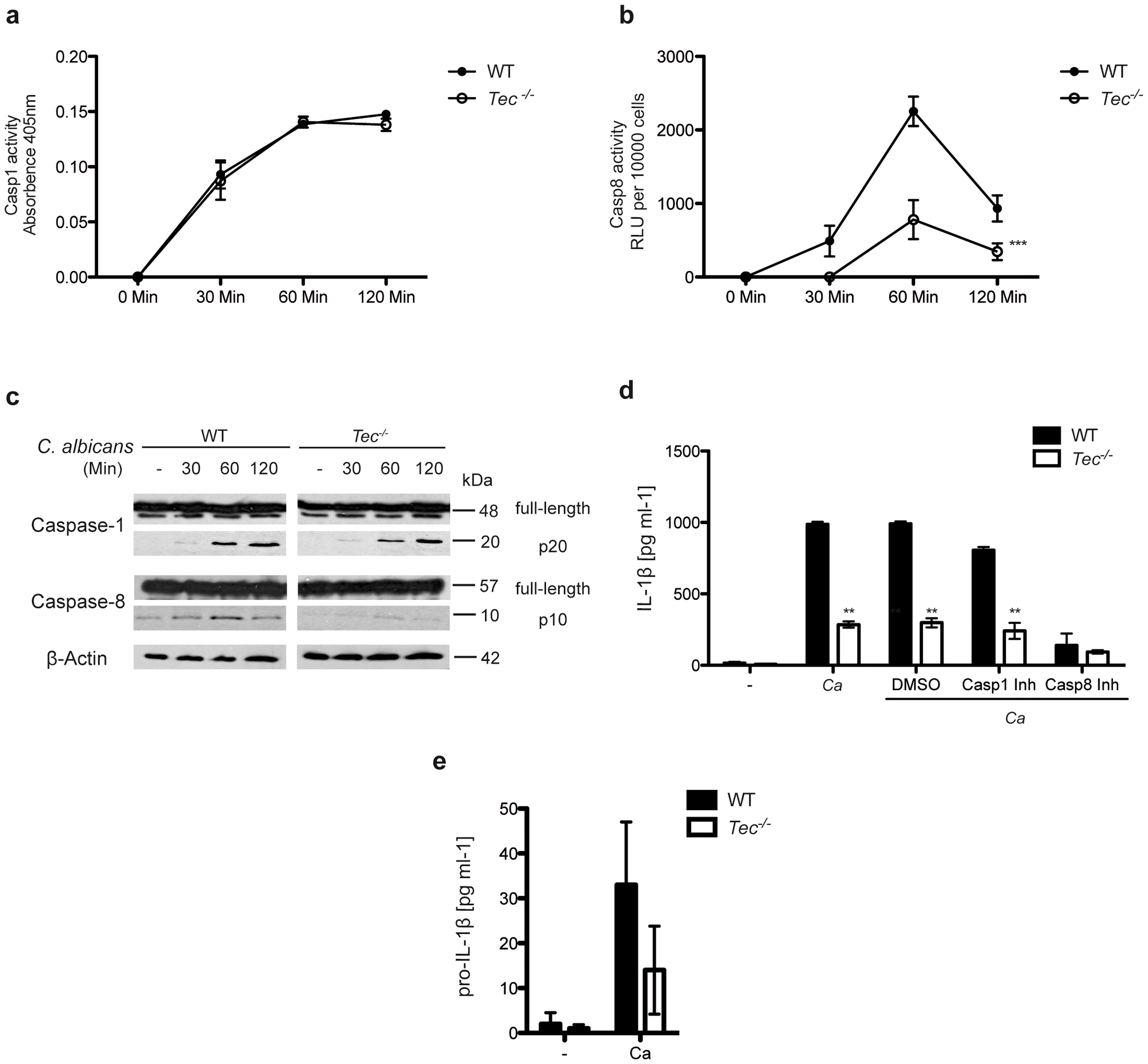 Caspase-8 activity in response to <i>C. albicans</i> requires Tec in BMMs.