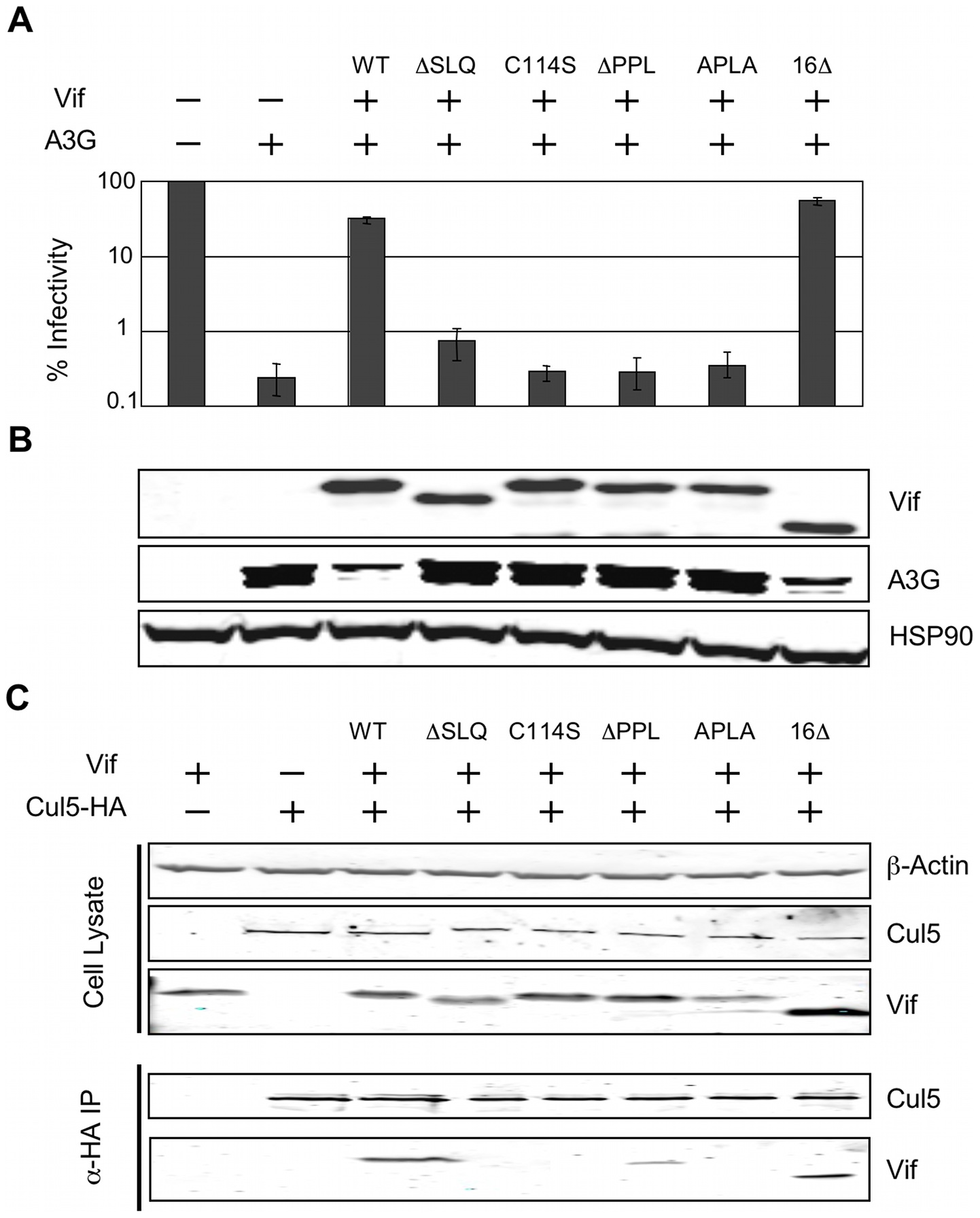 The interaction between the PPLP motif of Vif and EloB is necessary for binding to Cul5.