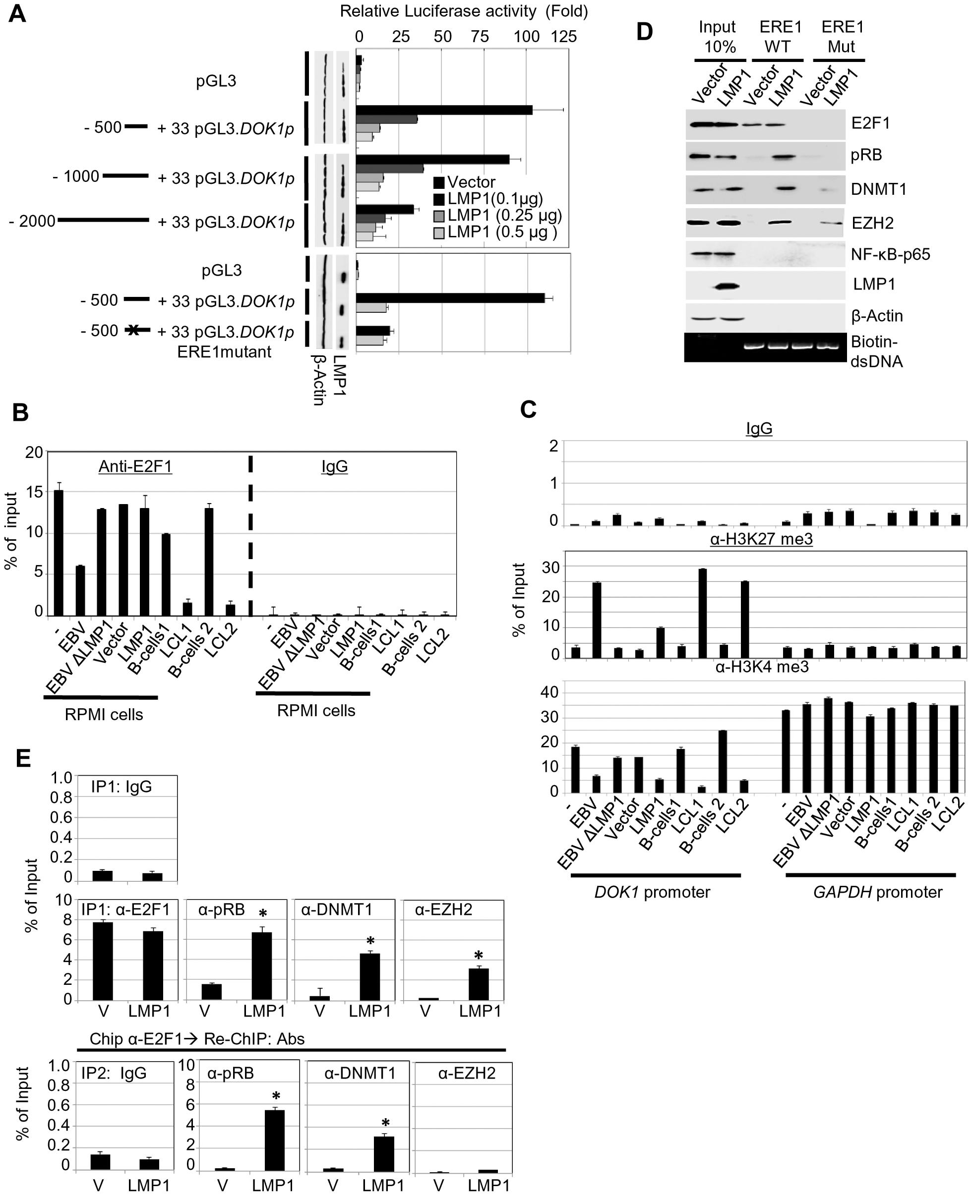 LMP1 represses <i>DOK1</i> promoter activity through the recruitment of E2F1/pRB/DNMT1 inhibitory complex.